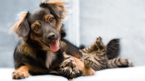 wallpaper cat dog friends full hd 1920x1080 - Cães e gatos são amigos ou inimigos?