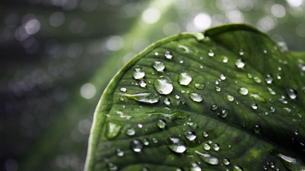 wallpaper-leaf-water-drop-full-hd-amazing-photo-desktop