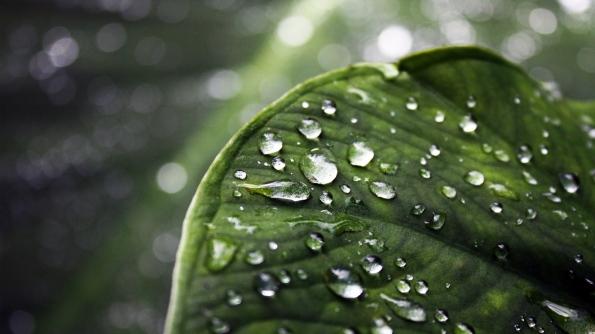 wallpaper-leaf-water-drop-full-hd-amazing-photo-desktop